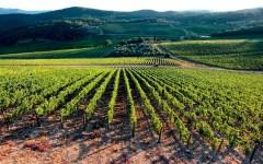 Agricoltura, Toscana: boom di domande (982) di giovani imprenditori