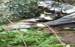 Pontedera: capriolo impigliato nella rete salvato dai vigili del fuoco