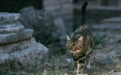 Camaiore: decine di gatti in fuga. Tagliata la rete del rifugio «I Miciottoli»