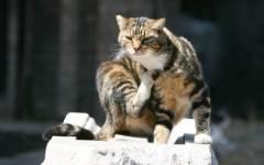 Firenze: il gatto Ogghy non ce l'ha fatta, è morto appena tornato a casa