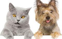 Animali: nasce «Dottor Bau & Dottor Miao», mutua per cani e gatti, costerà 120 euro l'anno