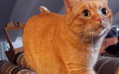 Prato: multato (413 euro) automobilista che ha investito un gatto e si è dato alla fuga