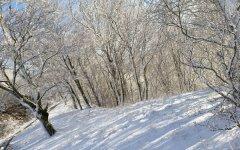 Arezzo, maltempo: pioggia in città, neve sul Pratomagno
