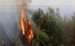 Incendi in Toscana: a Castiglione della Pescaia bruciati 150 ettari di macchia. A Volterra distrutti campi di grano