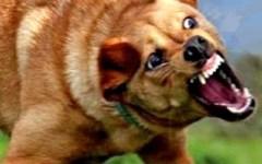 Firenze: cane feroce terrorizza passeggeri di un autobus, costretti a scendere