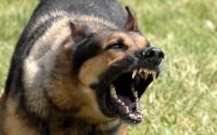 Oregon: i cani abbaiano, la Corte d'Appello ordina di tagliare loro le corde vocali