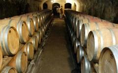 Vino, Toscana: annata difficile per la vendemmia, poca ma di buona qualità