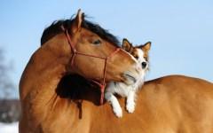 Animali: ogni tre minuti si abbandona un cane, un gatto o un cavallo. Le stime dell'aidaa