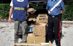 Rufina; due persone denunciate, detenevano tartarughe senza la prescritta certificazione