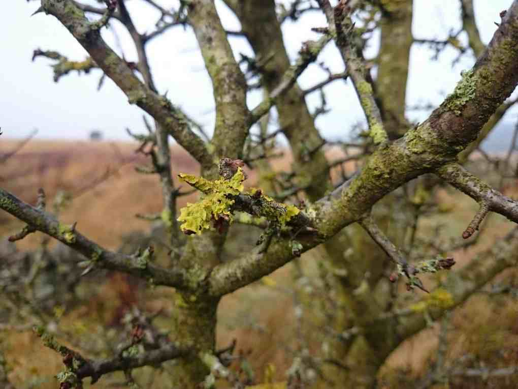 Lichen covered branches match the earthy green weft of Bracken Aqua Gossamer