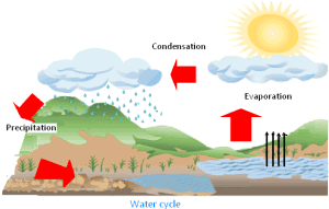 Forms of Water | Explanation on Water Cycle Along with the
