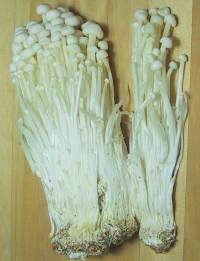 Cultivated Enokitake mushrooms