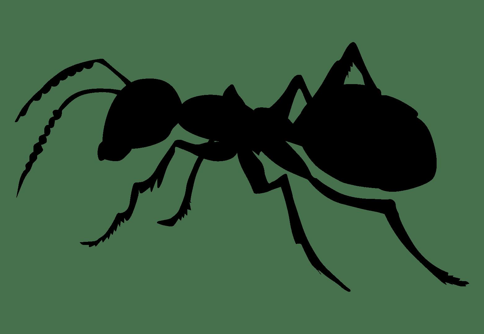 First Choice Pest Management