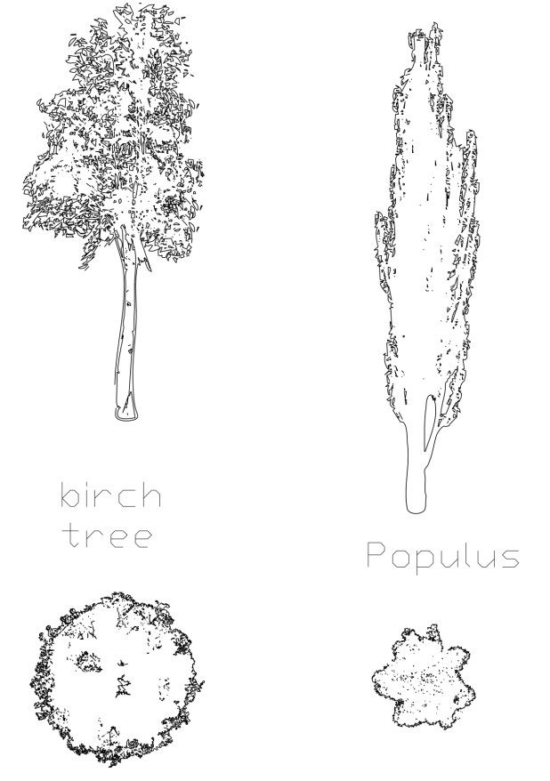 Birch and Populus