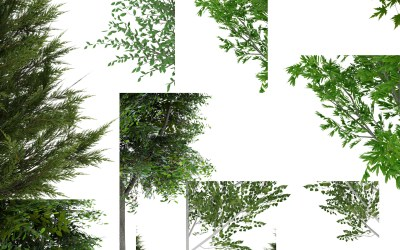 Free Tree Download