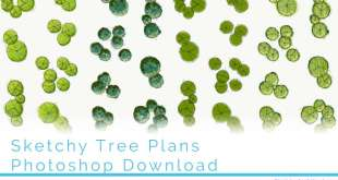 Sketchy Tree Plans Photoshop Download