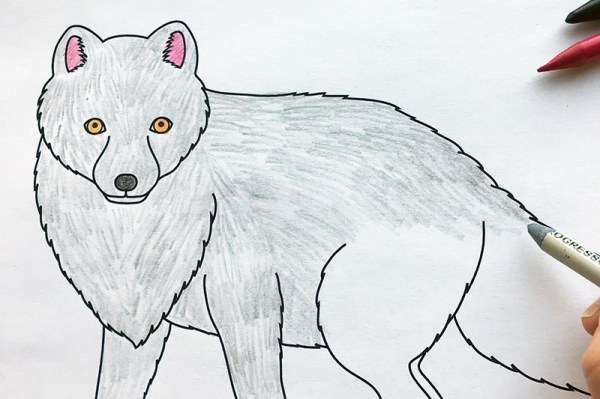 arctic fox coloring page # 8