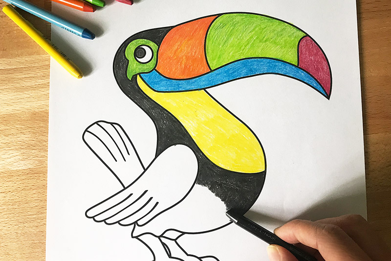 toucan  free printable templates & coloring pages