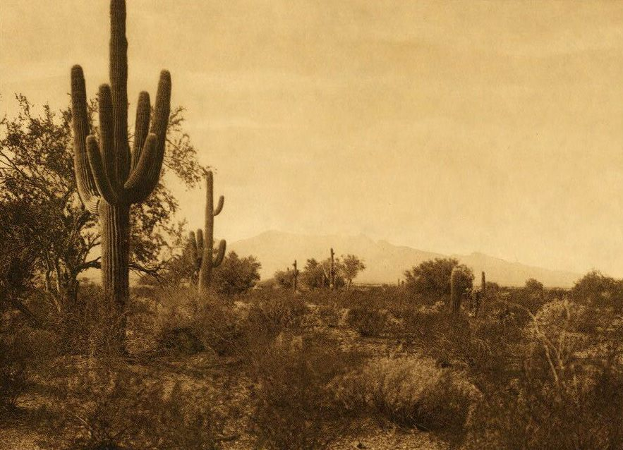 A Photograph of Pima Land.