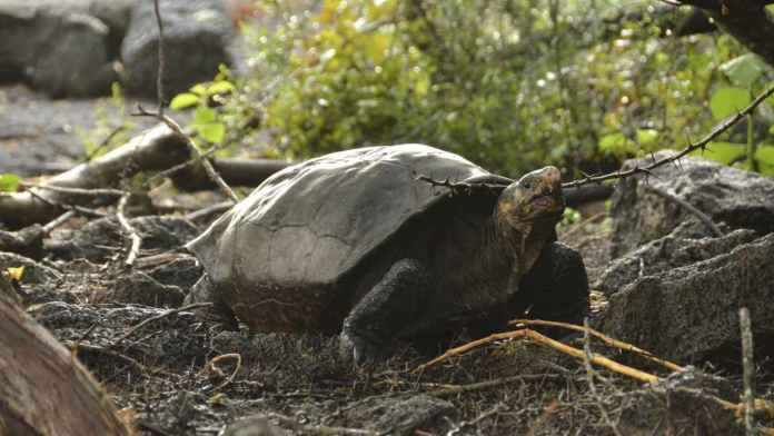 Galapagos airport staff find 185 tortoises in suitcase during routine inspections