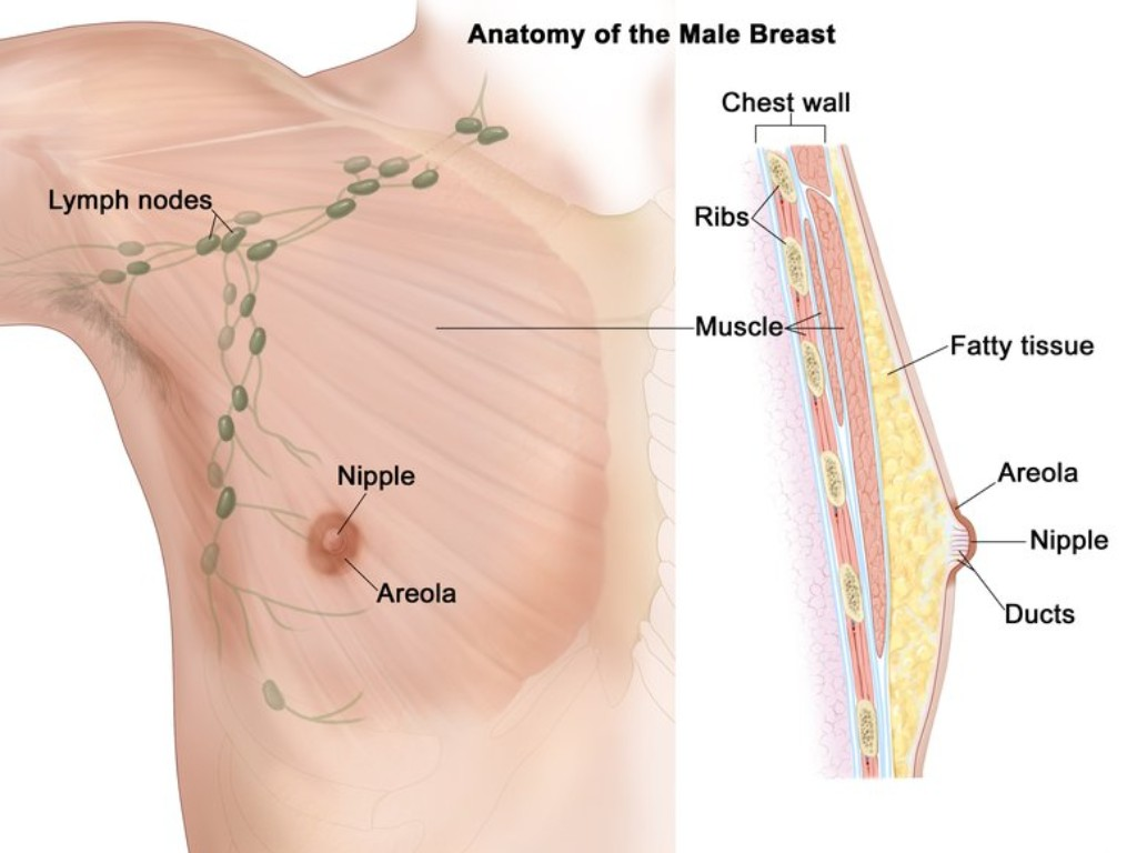 Breast Cancer Month Men succumb to breast cancer too everything you need to know