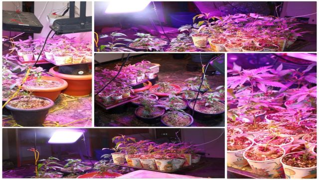 Bengalurubased MBA inspired by Lord Shiva grows ganja in fish tanks at home with LED lights
