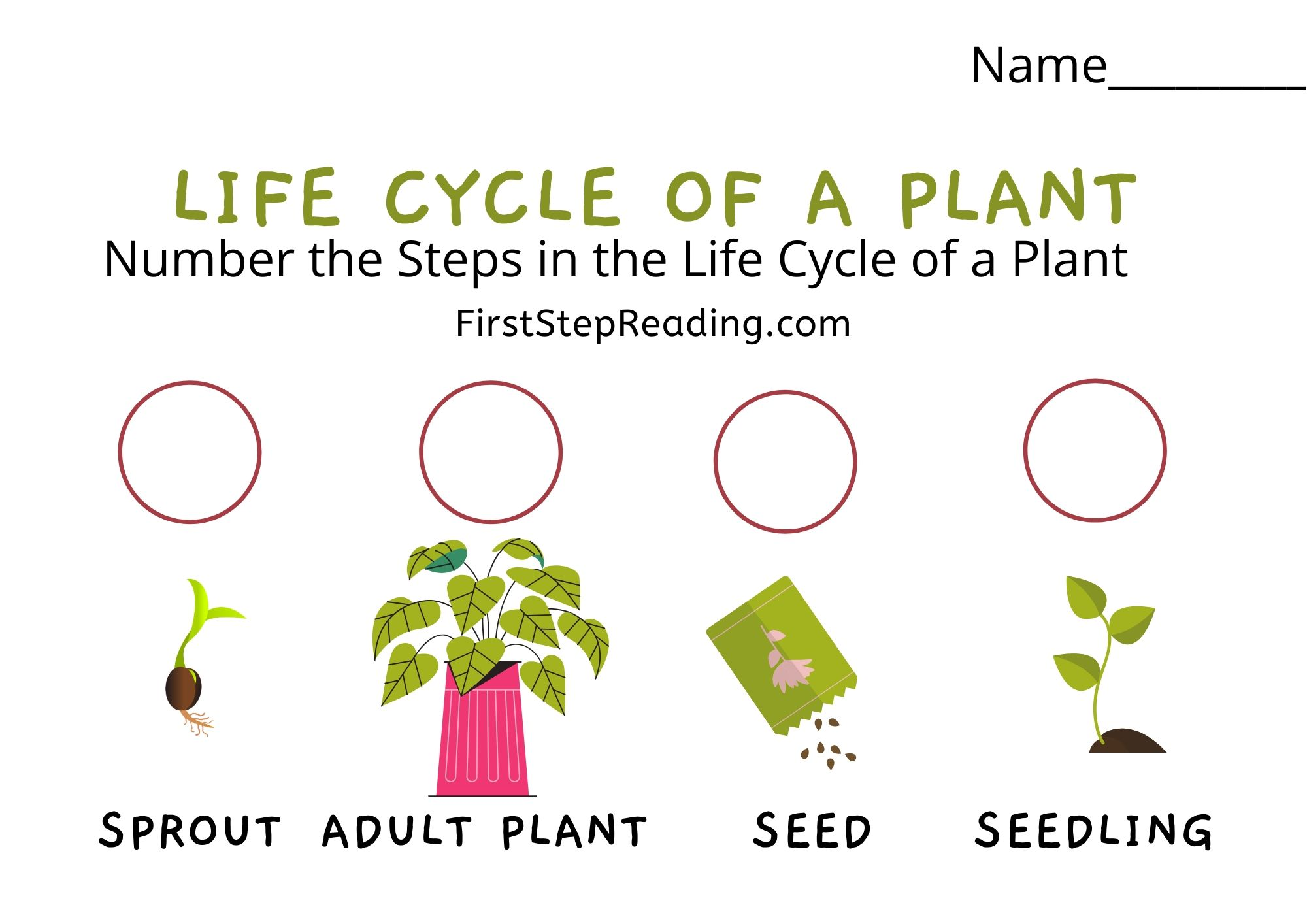 Life Cycle Of A Plant 1 4