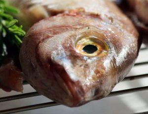 Frischen Fisch erkennen - Die Augen sollten klar und gewölbt sein wie hier auf dem Bild.