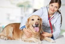 Legge di Bilancio 2020: nuovi limiti per le spese veterinarie