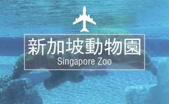 新加坡 | 来世界十大动物园 与红毛猩猩近距离接触