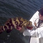 islamorada goliath grouper fishing