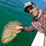 islamorada goliath grouper