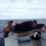 islamorada sailfish