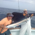 bnm sailfish