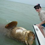 florida keys goliath grouper