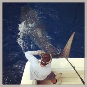 tiger shark bnm ii