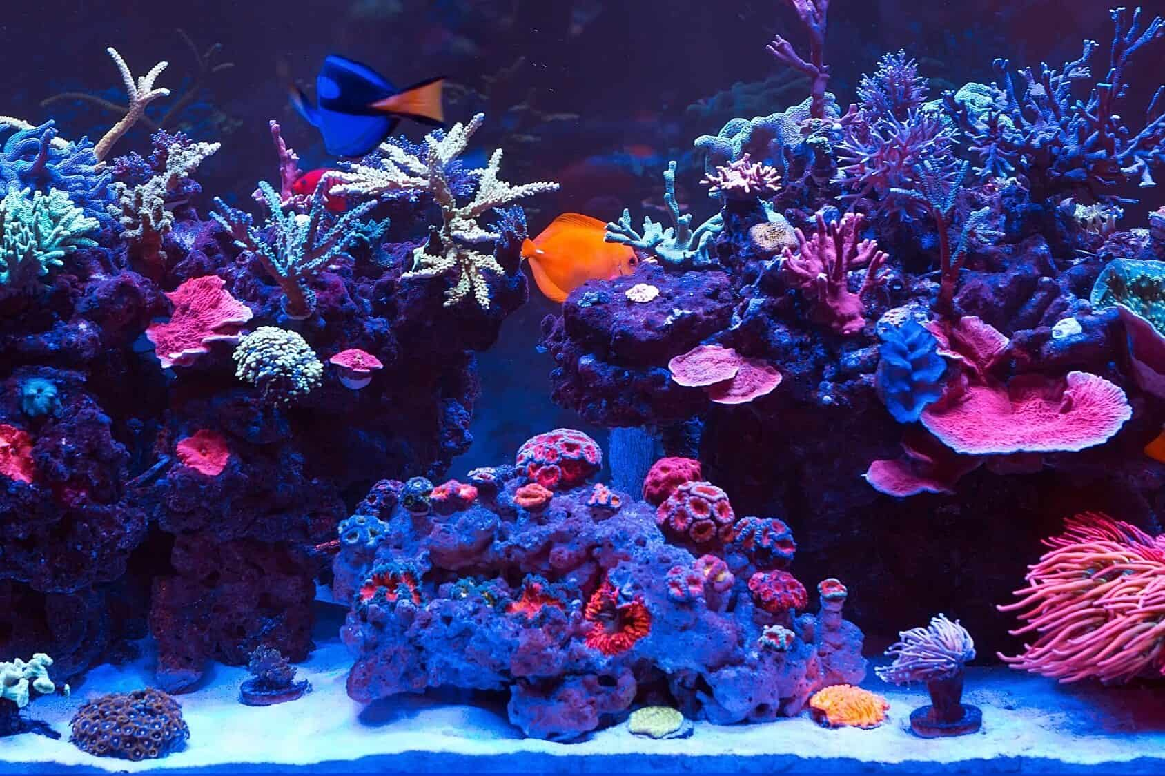 saltwater aquarium complete set up