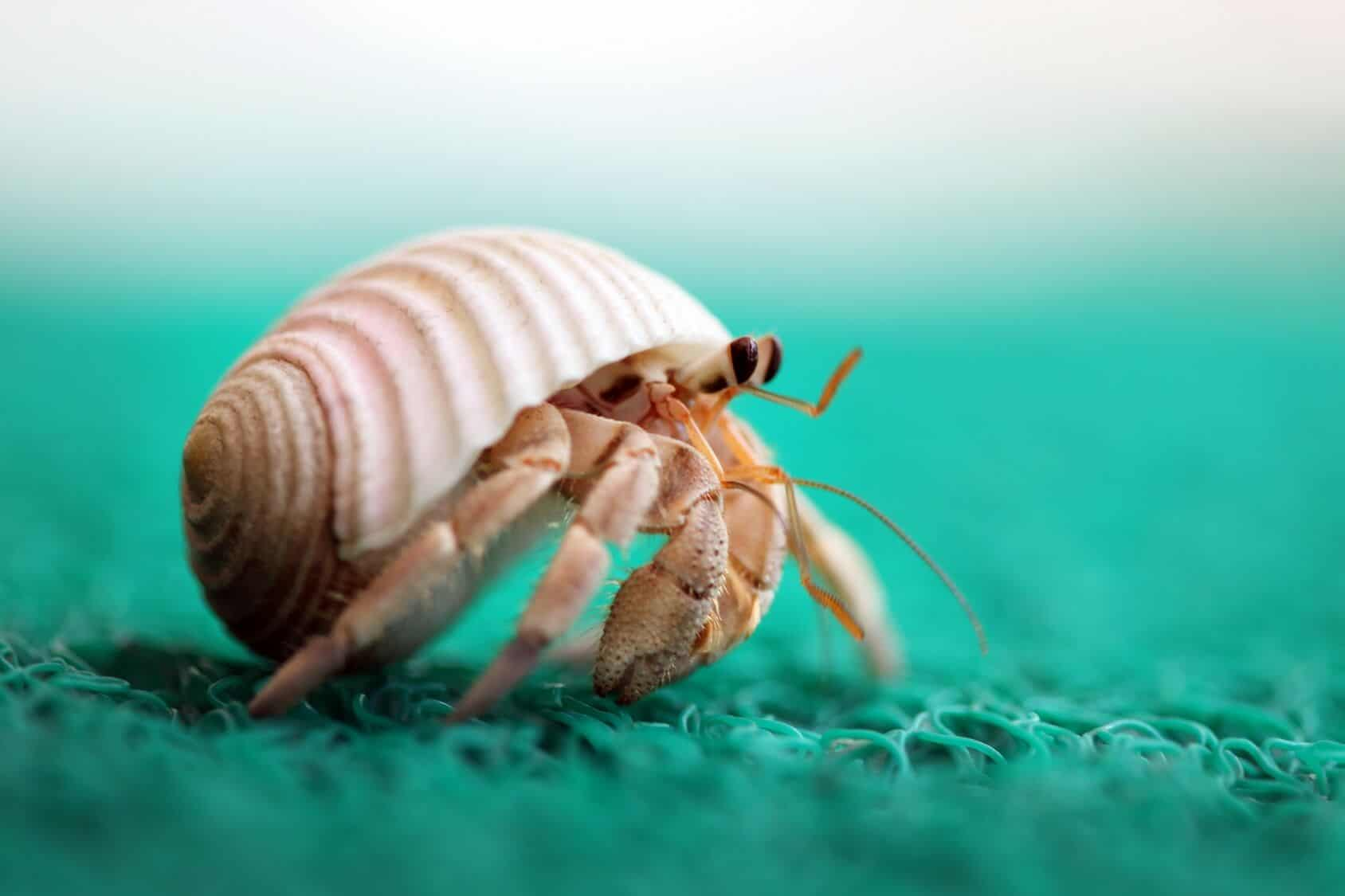 The Ultimate Hermit Crab Care Guide Habitat Food And
