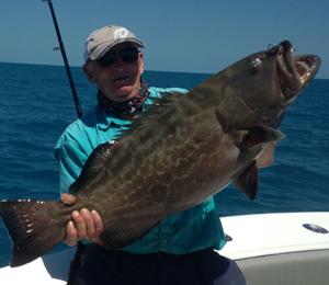 """Image result for """"black grouper fish"""""""