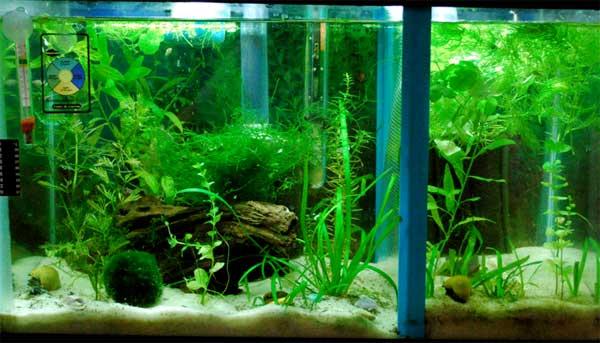 Flourite Aquarium