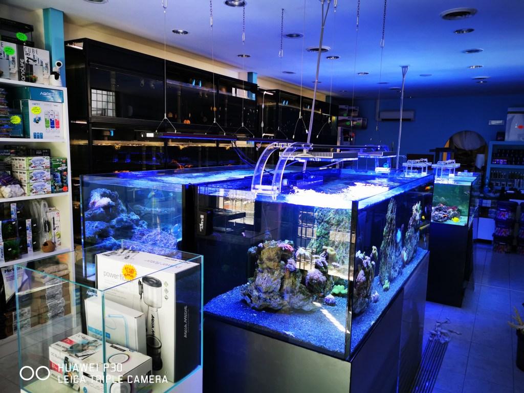 Fish & Corals Vasche espositive marine