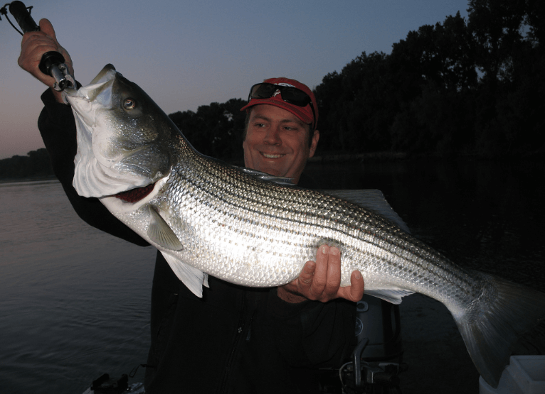 Topwater Stripers at dawn are so fun!