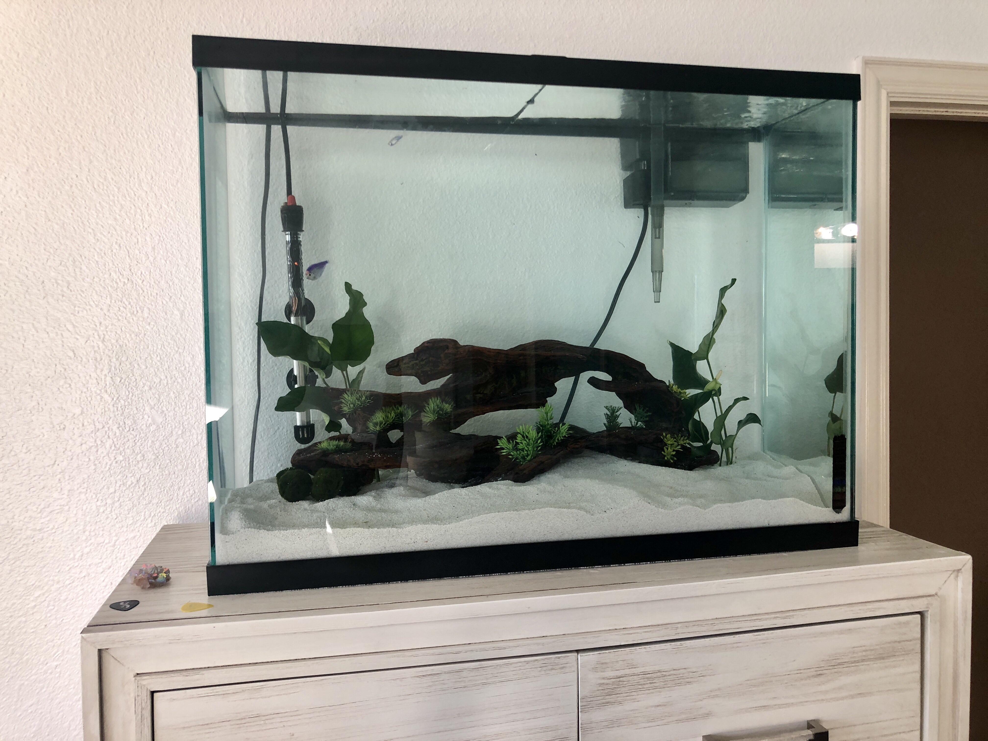 setting up of a 37 gallon aquarium