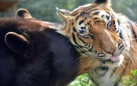 amistad entre animales y fisiomuro02
