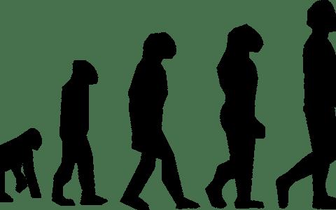 modificaciones geneticas y fisiomuro02