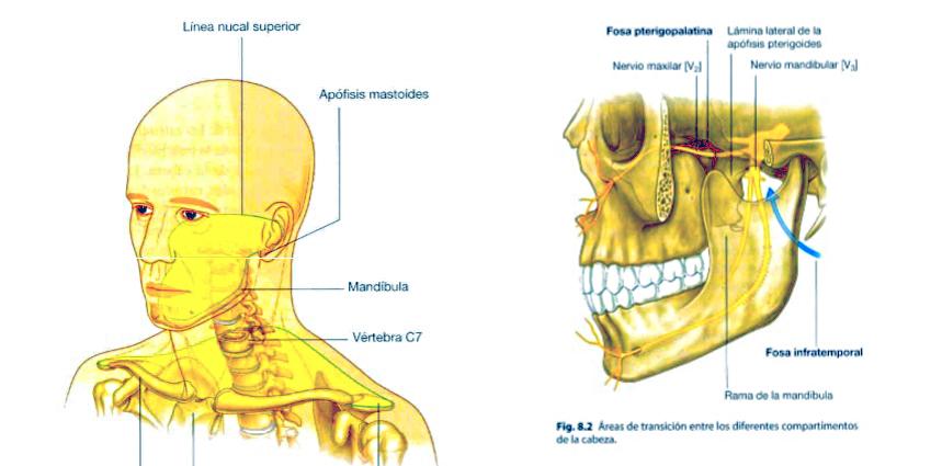 Trastorno temporo-mandibular y su relación con la columna cervical ...