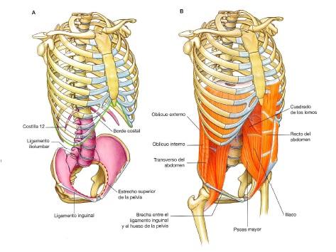 Fisioterapia en ginecología: valoración abdomino-pélvica en la mujer ...