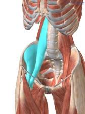 Psoas fisioterapia ileopsoas dolore