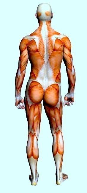 contratura, dor muscular, força, contração, esportes, atletas, sobrecarga, acidente. #massagem #massagista #massoterapia #dor #muscular #contratura #caimbra #lesao #distensao #contusao #machucado #nascostas #muscular #inflamacao #colunatravada #saojosesc #floripa #florianopolis #palhoca #biguacu #antoniocarlossc
