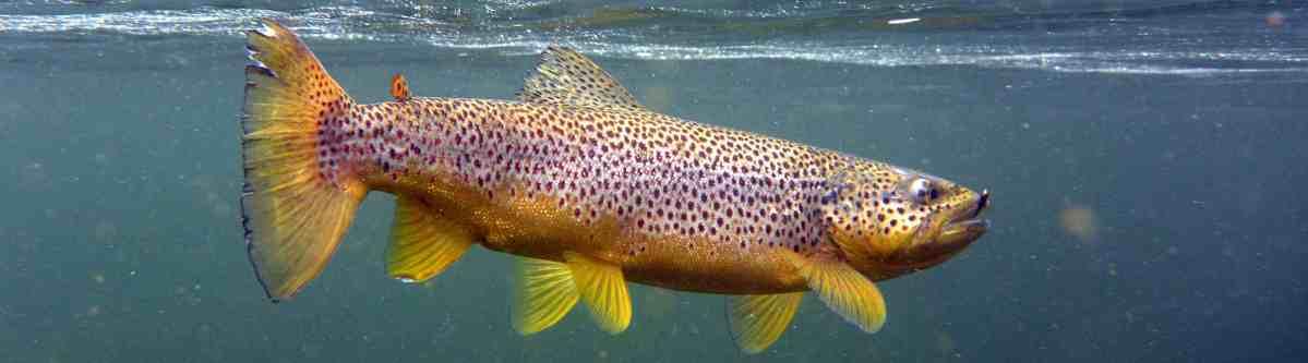 FISKING.NO